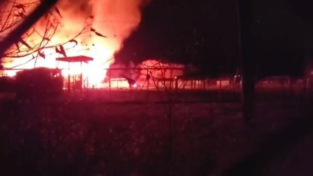 VIDEO | Incendiu devastator de Ziua Recunoştinţei, într-o grădină zoologică din SUA. Cel puţin 10 animale au murit.