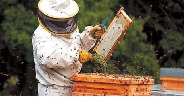 Un grup de apicultori de pe ambele maluri ale Nistrului vor putea exporta miere în Italia