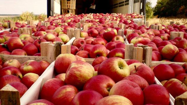 Iurie Fală:  ''Noi am dublat contingentele tarifare către Uniunea Europeană. România a importat 12 mii de tone de mere, ceea ce ne bucură foarte mult ''