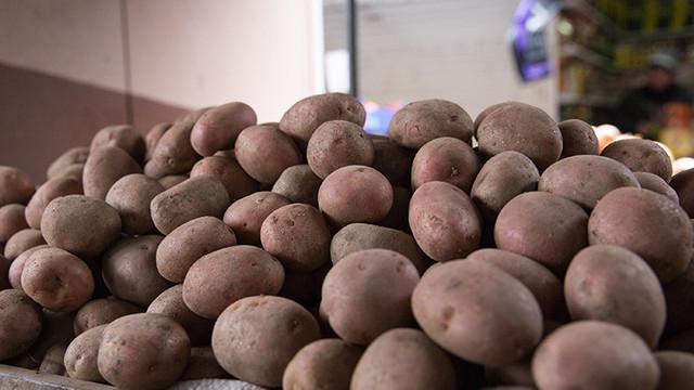 ANSA | 95% din loturile de cartofi care vin în Republica Moldova sunt infestate cu o bacterie