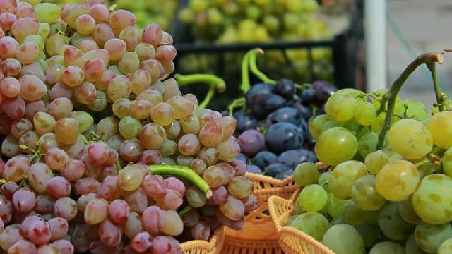 UE deschide ușa pentru importuri suplimentare din R. Moldova