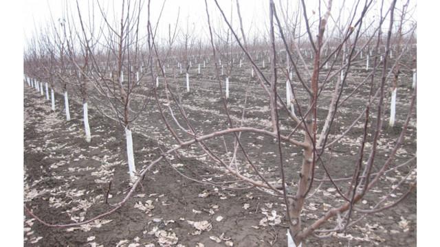 Temperaturile ridicate din această iarnă afectează pomii și culturile agricole, iar recolta riscă să fie compromisă