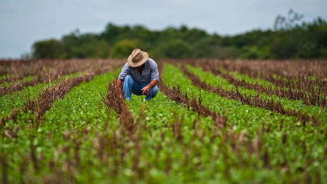 FISC: În agricultură se plătesc salariii sub limita sărăciei (Agrobiznes)