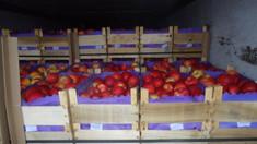 PPDA va cere demisia ministrului agriculturii pentru că ar fi împiedicat transparentizarea exportului de fructe la cererea lui Dodon