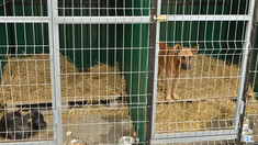 """Azilul pentru câini """"AOVA"""" a rămas fără ajutor veterinar. Îngrijitorii cer ajutor"""