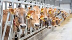 Ion Perju: Noi importăm carnea care este crescută cu materie primă din Moldova
