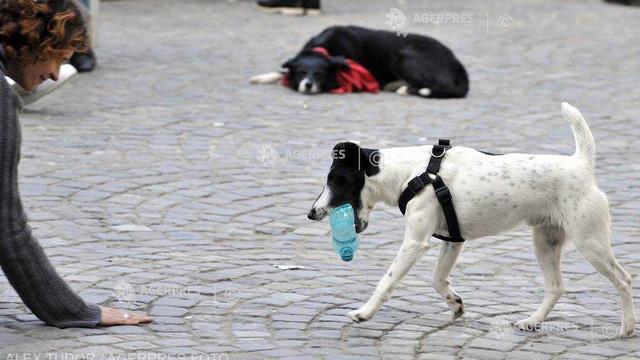 Studiu | Câinii fără stăpân, nedresaţi, sunt capabili să înţeleagă gesturi complexe doar observând îndeaproape omul
