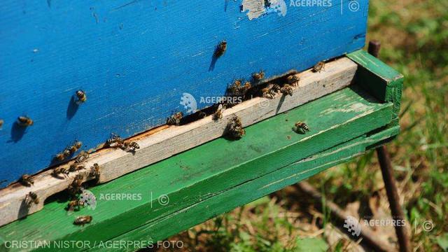 Comisia Europeană interzice un pesticid care este dăunător pentru albine