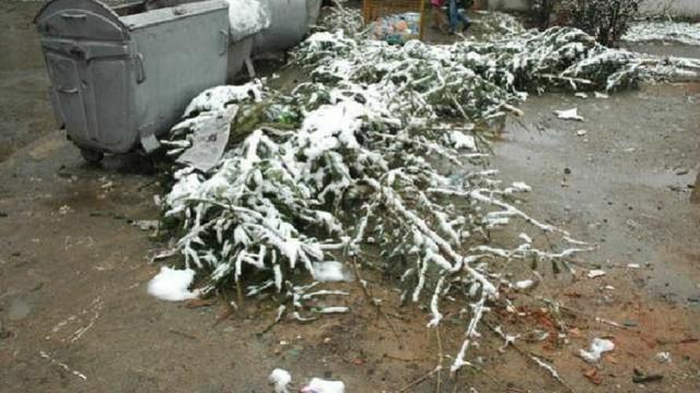 Chișinăuienii, îndemnați să depoziteze brazii separat în preajma platformelor de deșeuri