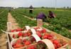 Agricultorii din R.Moldova tot mai des apelează la servicii și tehnologii care îi ajută să facă economii și le asigură o productivitate mai mare