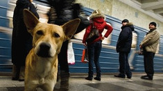 Rusia - Animale fără stăpân, adunate de pe străzi şi şobolani exterminaţi la Moscova de teama coronavirsului