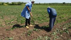 """Vasile Mîrzenco: """"Accesul fermierilor la băncile comerciale este redus, fiindcă acestea îi privesc ca clienți riscanți"""""""