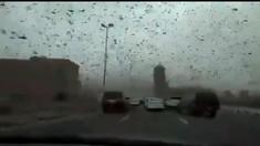 Imagini apocaliptice în Bahrain. Lăcustele au invadat cerul şi au transformat ziua în noapte