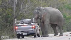 VIDEO | Un elefant din Thailanda îşi învaţă puiul să fure mâncare din maşini