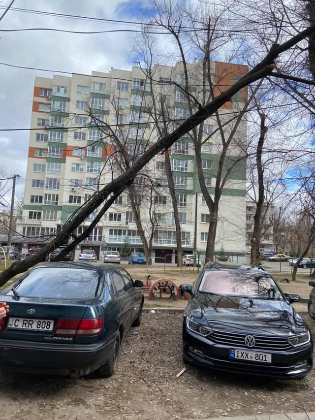 FOTO   Consecințele vântului puternic în Capitală