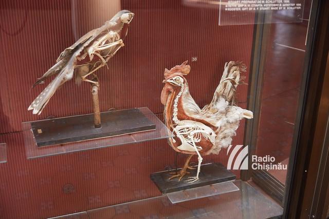PATRIMONIU CULTURAL | Primele exponate muzeistice din Chișinău