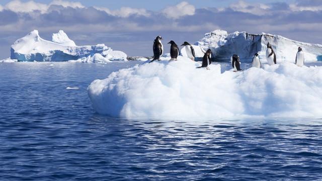 În Antarctica se înregistrează pentru prima dată temperaturi de peste 20 de grade Celsius