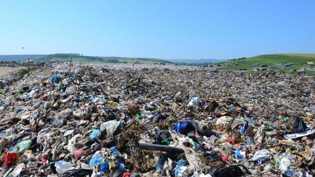 """Descoperirea uluitoare făcută la o groapă de gunoi din Japonia de un angajat la salubritate: """"Este o premieră"""""""