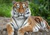 Un tigru de la o grădină zoologică din New York a fost testat pozitiv cu coronavirus, după ce ar fi fost îmbolnăvit de un angajat