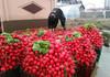 Alexandru Slusari îi cere lui Chicu să ia măsuri urgente de susţinere a agricultorilor, pentru vânzarea produselor de sezon