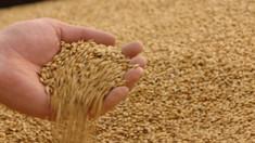 Eliberarea a circa 20.800 de tone de grâu din rezervele de stat, aprobată de Guvernul interimar
