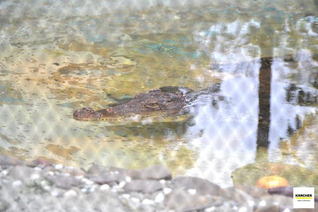 În lipsa vizitatorilor, la grădina zoologică din Chișinău, mai multor animale le-au fost schimbate condițiile de habitat