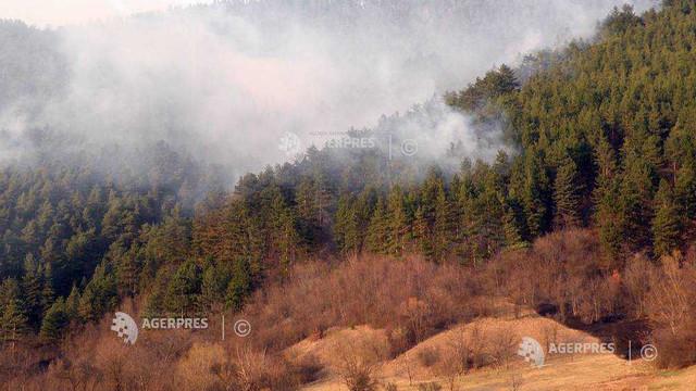 Incendiu de pădure în zona de excludere de la Cernobâl