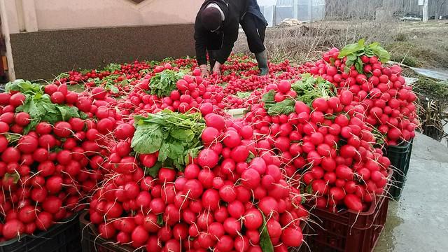 Alexandru Slusari îi cere lui Chicu să ia măsuri urgente de susținere a agricultorilor, pentru vânzarea produselor de sezon