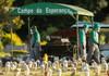 Coronavirus: Brazilia depășește SUA la numărul deceselor zilnice și continuă să recomande folosirea hidroxiclorochinei