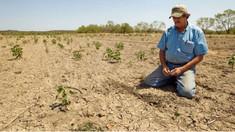 Producătorii agricoli năpăstuiți, lăsați să se descurce pe cont propriu: Demult lucrez în agricultură și e prima dată când statul nu se implică chiar deloc