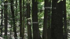 Suprafața pădurilor a crescut cu peste 9.000 de hectare în anul 2019 față de anul anterior
