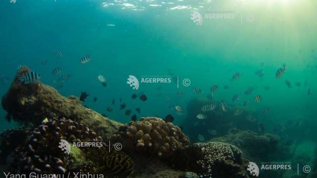 STUDIU   Cicloanele puternice pot distruge recife de corali aflate chiar și la 1.000 de kilometri distanță