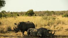 Pământul trece prin a șasea extincție în masă, iar oamenii sunt vinovați
