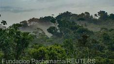 Sute de persoane folosesc social media pentru a vinde teren ocupat ilegal din pădurea amazoniană