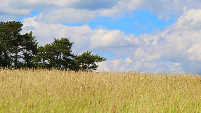 Raportul CCRM privind gestionarea terenurilor agricole proprietate publică: venituri ratate din plățile pentru arendă, terenuri neînregistrate, date denaturate în Registrul patrimoniului public