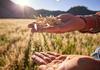 Agricultorii își calculează pierderile: În loc de 5-6 tone la hectar, am luat o tonă, iar calitatea grâului este foarte proastă