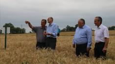Roada de grâu va fi mai mică în acest an. Ion Perju: În sudul țării seceta a afectat 80% din terenurile agricole