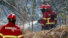 Portugalia - Un pompier a murit și alți trei au fost răniți într-un incendiu de vegetație