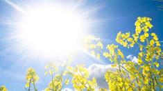 Fonograful de miercuri | Vara promisă