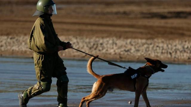 Armata germană antrenează câini pentru a putea să detecteze persoanele infectate cu noul coronavirus