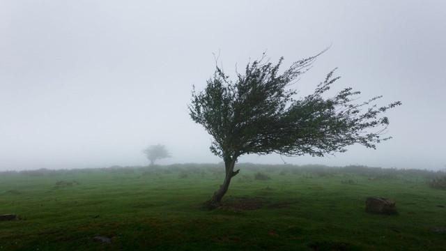 Cod galben de vânt puternic pe întreg teritoriul R.Moldova
