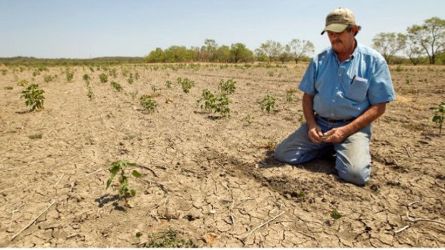 Agricultorii anunță proteste și cer declararea stării excepționale în agricultură: Vă dați seama ce înseamnă pentru un singur raion pierderi de peste 150 de milioane de lei?