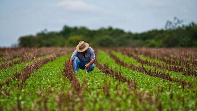 Agricultorii care au suferit în urma secetei ar putea beneficia de suport suplimentar