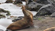 Sute de vase de pescuit din China acționează ilegal în largul Insulelor Galapagos și pun ecosistemul în pericol:
