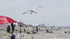 Belgia: Mai multe stațiuni de pe litoral interzic turismul de o zi