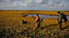 Executivul a decis cu privire la termenele de vânătoare în sezonul 2020-2021