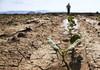 Producătorii agricoli, cu terenuri însămânțate cu porumb care au fost afectate de secetă în proporție de 60 la sută, pot depune cereri pentru a primi subvenții