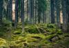 În ultimele două decenii, planeta a pierdut aproape 100 de milioane de hectare de pădure
