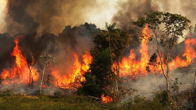Amazonul, afectat probabil de cele mai devastatoare incendii din ultima decadă