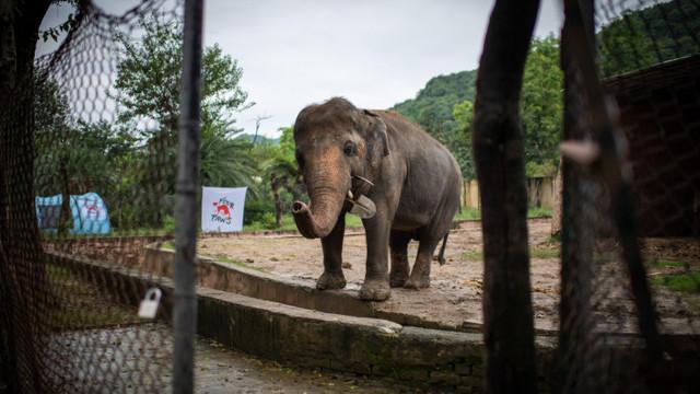 """Povestea """"celui mai singuratic elefant"""" din lume. După 30 de ani, primește o nouă șansă"""